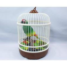 Музыкальный попугай в клетке